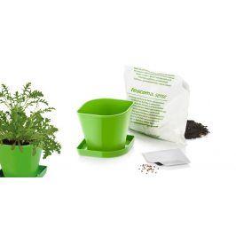 Súprava na pestovanie byliniek SENSE, rukola
