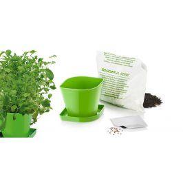 Súprava na pestovanie bylinek SENSE, ázijská zmes